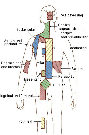 Img: lymph node areas